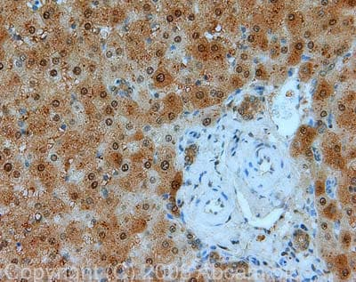 Immunohistochemistry (Formalin/PFA-fixed paraffin-embedded sections) - Anti-GAPDH antibody [mAbcam 9484] - Loading Control (ab9484)