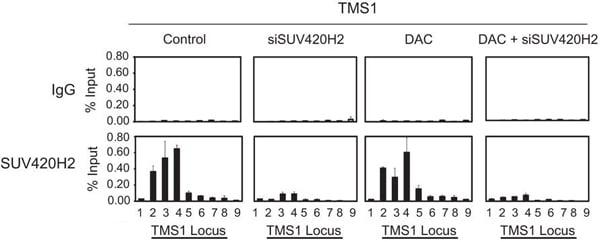ChIP - Anti-KMT5C/SUV4-20h2 antibody - ChIP Grade (ab91224)