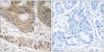 Immunohistochemistry (Formalin/PFA-fixed paraffin-embedded sections) - Anti-RFX3 antibody (ab92670)